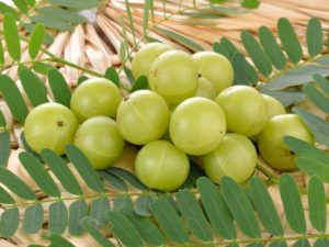 amla summer fruits