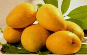 Mango summer fruits